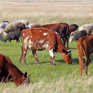Agricultural Grasses