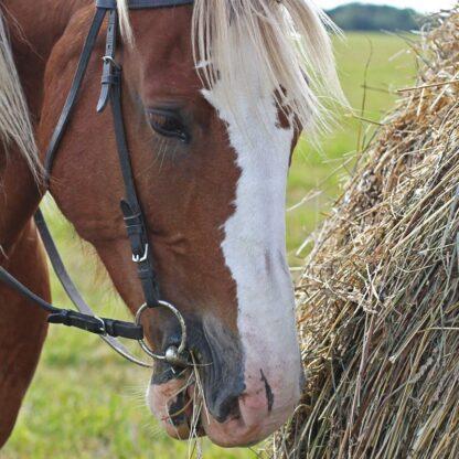 equine mixes hay & haylage