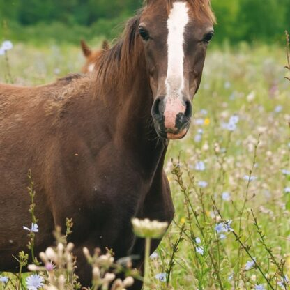 equine mixes grazing boost