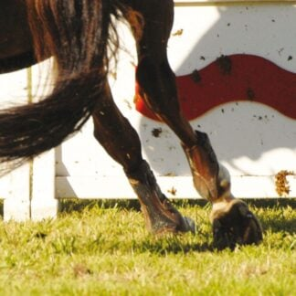 equine mixes riding area