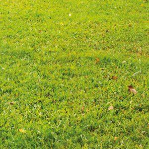 Seeding New Lawn