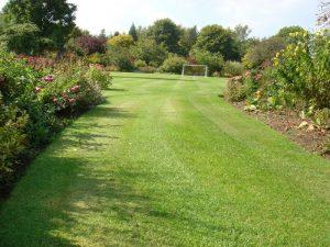 Lawn Seeds Home garden