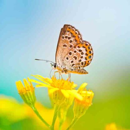 pollen & nectar