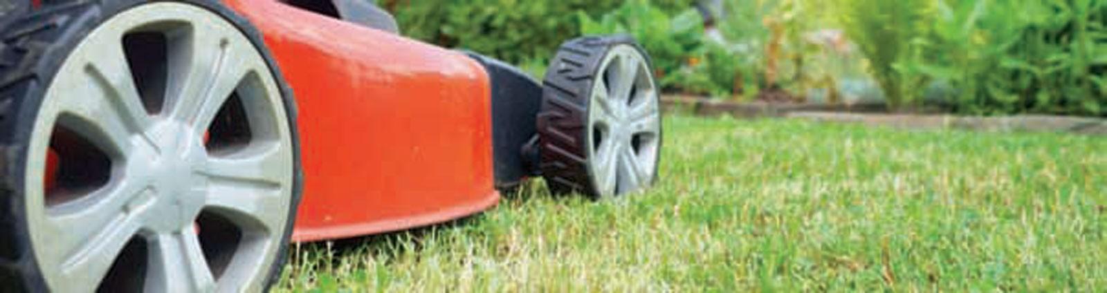preparing a new lawn