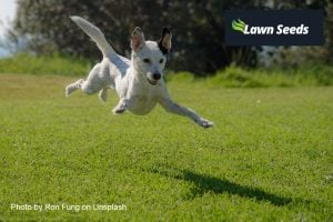 Happy flying dog across a garden lawn