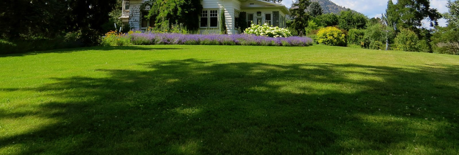grasses for shade shady areas