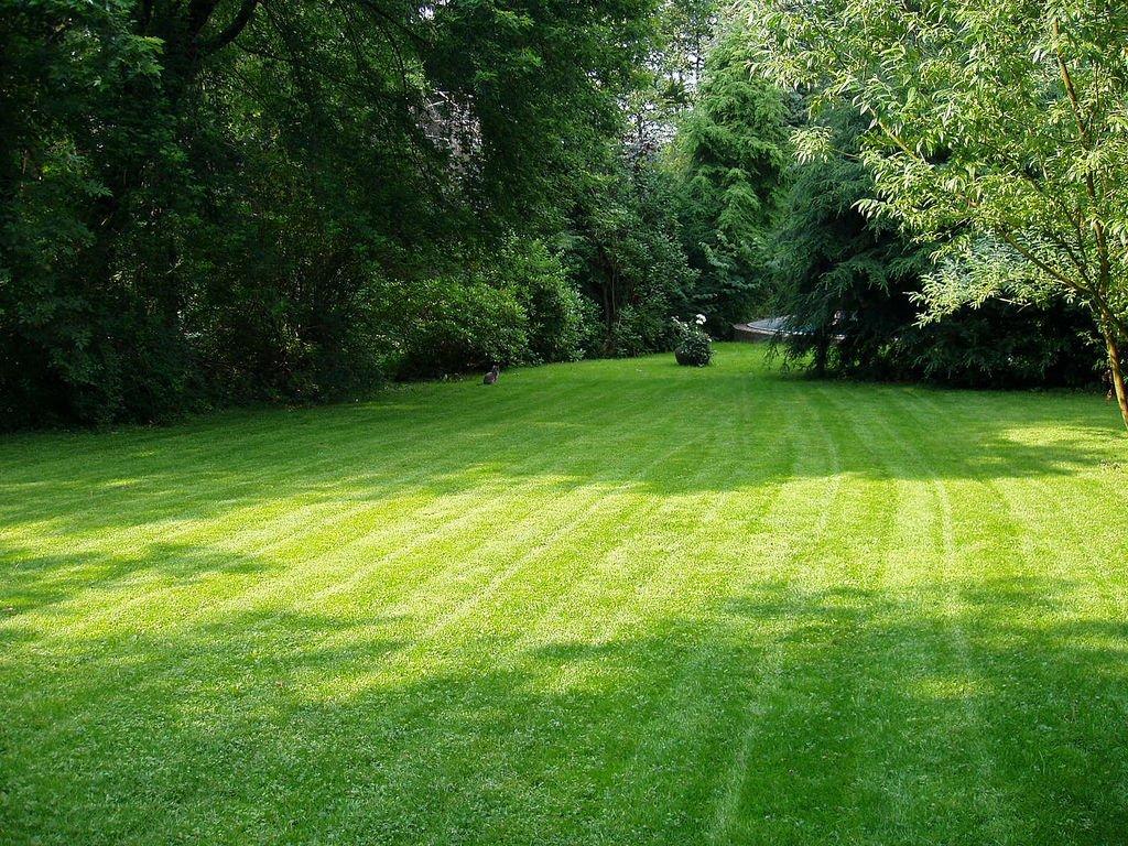 Turf or turfed garden