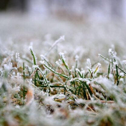 Winter Grass Seed Mix ideal for sowing during the cold months at temperatures as low as 5°C