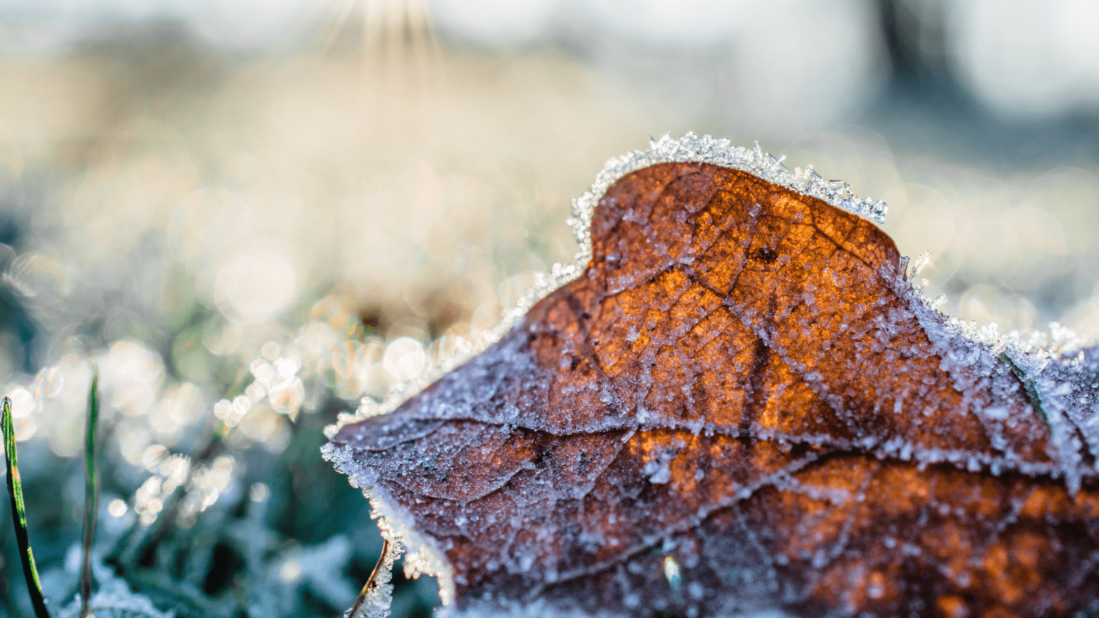 Frequent Frost and Potential Snow, How to Maintain Your Lawn This February – Lawn Seeds